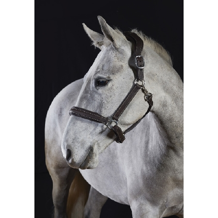 GFS Premier Deluxe leather Head Collar (B280)